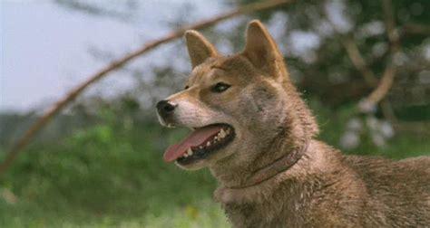 a tale of mari and three puppies история мари и трех щенков смотреть онлайн
