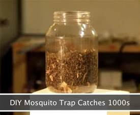 How To Rid Backyard Of Mosquitoes Diy Mosquito Trap That Will Catch 1000s Homestead Amp Survival