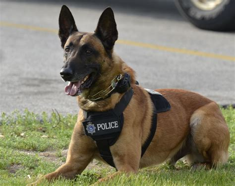 how to k9 dogs k 9 green bay department
