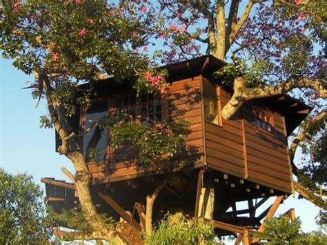 best tree house plans 10 best treehouse plans and designs coolest tree houses ever