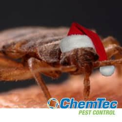 bed bugs don t bring pest control warning don t bring bed bugs home this holiday