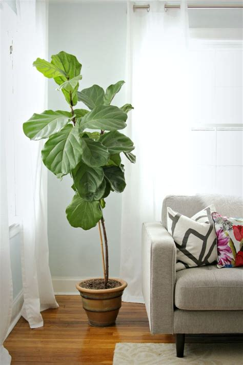 indoor decorative trees for the home 17 best ideas about indoor plant decor on pinterest