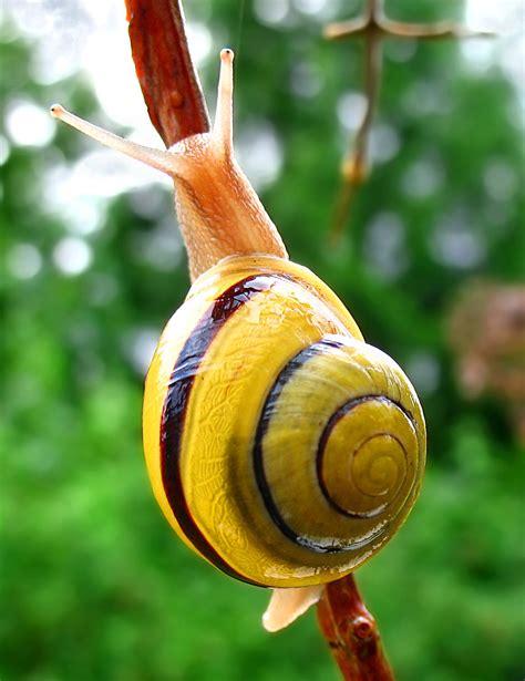 file snail wa edit02 jpg
