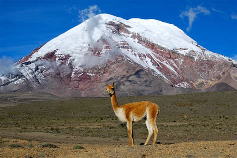 Search In Ecuador File Vicu 241 A Chimborazo Ecuador Jpg