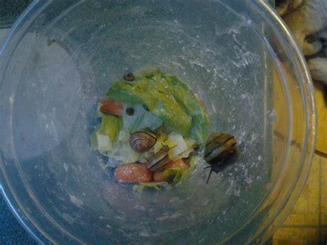 Dust Snail Green all my snails by alexandersmantids on deviantart