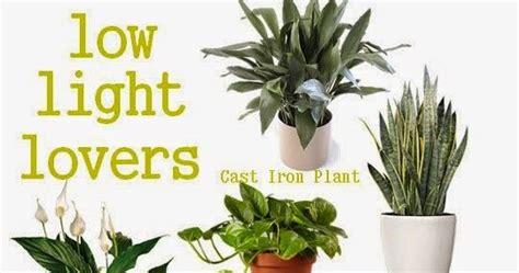 plants that need no light low light loving houseplants plants 101 gardening