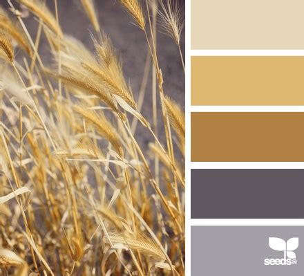 wheat color wheat fields colors