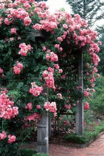 best trellis for roses best trellis for climbing climbing roses american