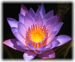crown lotus crown chakra lotus www pixshark images galleries