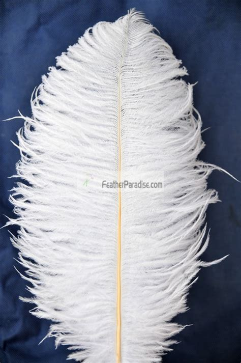 white ostrich feathers for sale centerpieces white ostrich feathers plumes wholesale bulk cheap