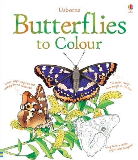 butterfly picture books butterflies to colour at usborne children s books