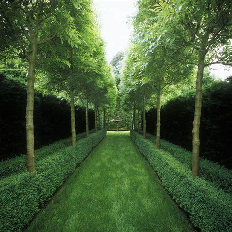 alley garden by fudge landscapes boxwoods a curious gardener garden designer fudge