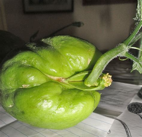 Chokos Ready To Plant Down To Earth Garden Ready Vegetable Plants