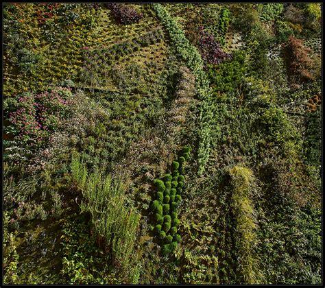 giardino verticale madrid giardino verticale 171 alberto zafferano fotografo