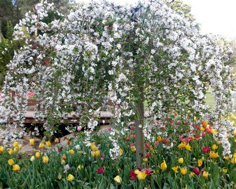 Araluen Botanic Garden Gardensonline Gardens Of The World Araluen Botanic Park