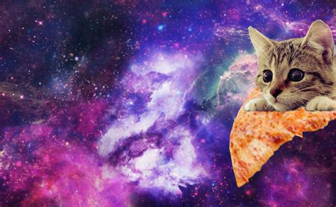 Cat In Space pizza cat in space www imgkid the image kid has it