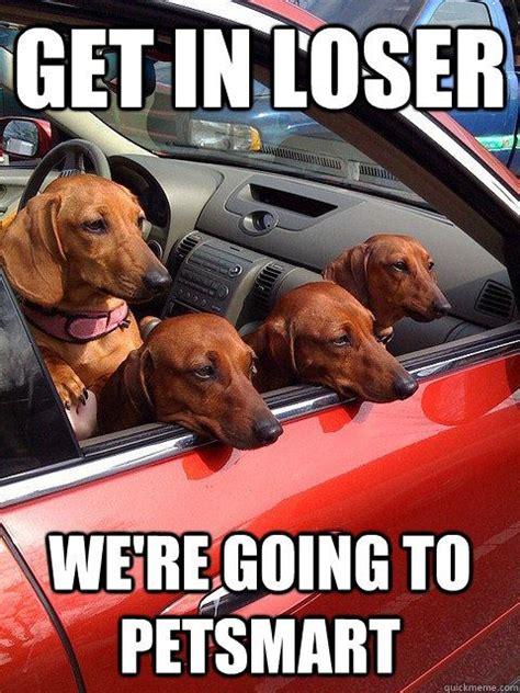 Funny Dachshund Memes - best 25 dachshund meme ideas on pinterest funny puppies