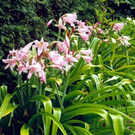 The Best Plants For A Water Garden 15 Flowers For | the best plants for a water garden 15 flowers for