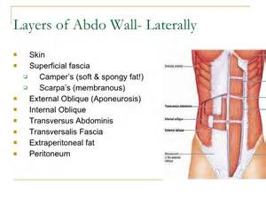 layers of abdominal wall c section pictures to pin on