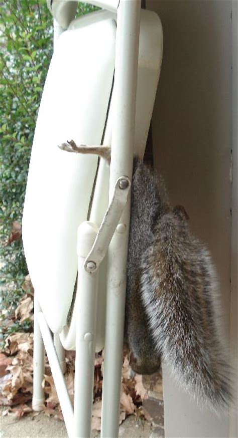 squirrel hung by nuts git ma 5 iron maw we s havin some squirrel baby boomer going like sixty