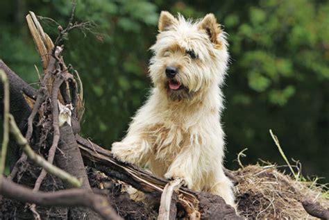 best farm dogs farm breeds breeds picture