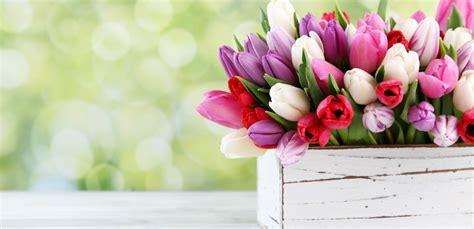 fiori di marzo i giardini di marzo i fiori da curare in questo mese leitv