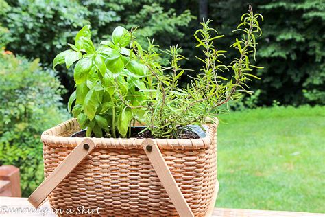 how to plant an indoor herb garden how to make an indoor herb garden running in a skirt