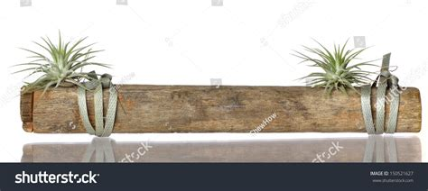 what is the scientific name for air air plant with scientific name tillandsia on a wood stock photo 150521627