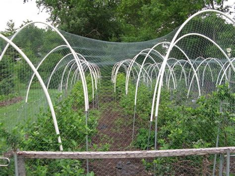 Vegetable Garden Netting Frame Pin By Blue Meg On Garden Cages