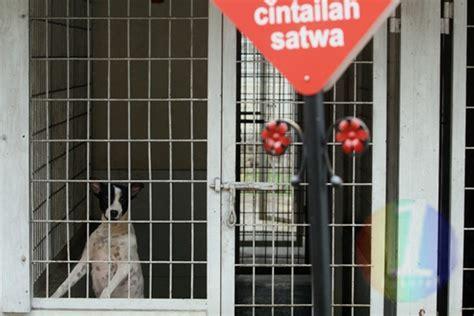 Kandang Kucing Permanen satu harapan jasa penitipan hewan peliharaan mulai ramai