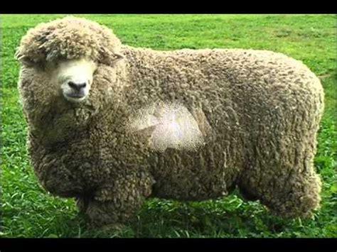 imagenes de animales carniboros animales carnivoros y hervivoros youtube