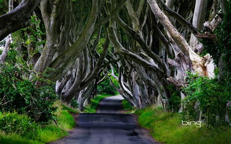7 Beautiful Tree Themes by Northern Ireland Forest Wallpaper
