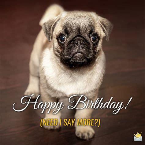 Animals Wishing Happy Birthday Cute Animals And Funny Happy Birthday Wishes