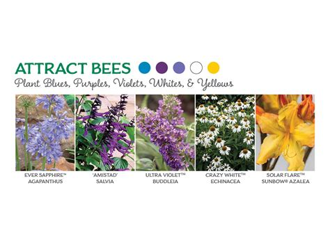 what colors attract butterflies the best flowers to attract butterflies bees and