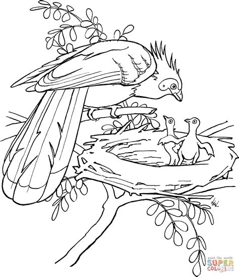 jungle birds coloring pages free printable rainforest coloring pages coloring home