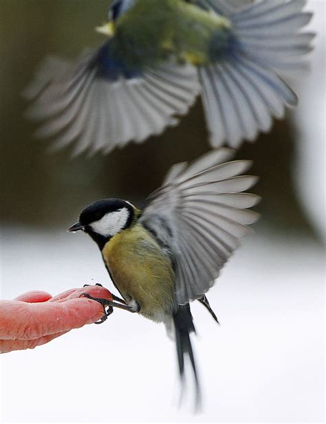 birds eating off the hand of a person in lazienki park in