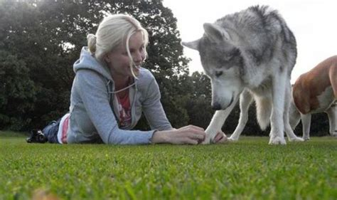 feed  dog    canine