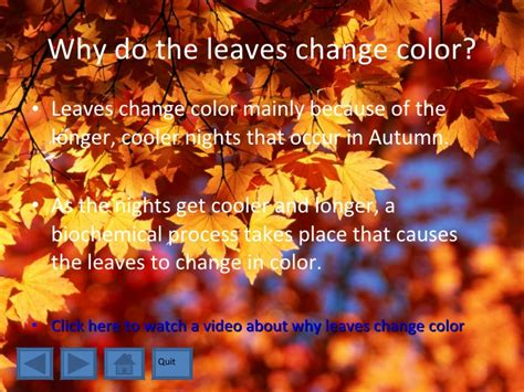 what causes the leaves to change color in the fall the changing leaves of autumn