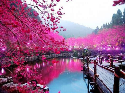 wallpaper cantik untuk komputer gambar bunga sakura di tepi danau sakura pinterest