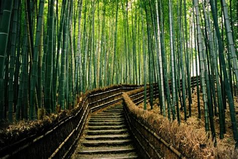 Chinese Wall Murals bamboo forest kyoto japan amazing world official