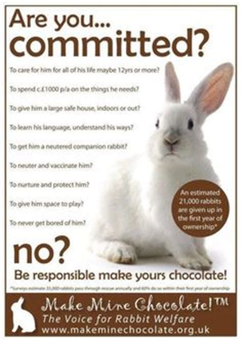 new year rabbit facts 1000 images about facts info on rabbit