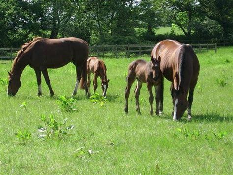 animali da cortile normativa allevamento cavalli cavalli