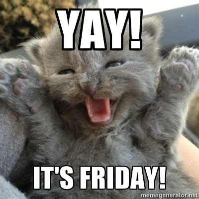 Friday Cat Meme - yay it s friday ஜ cat felidae family ஜ