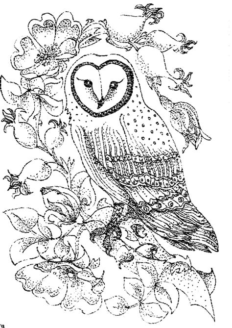 Barn Owl Color Page 3 Gif 600 215 848 Sts 2 Pinterest Barn Owl Coloring Pages