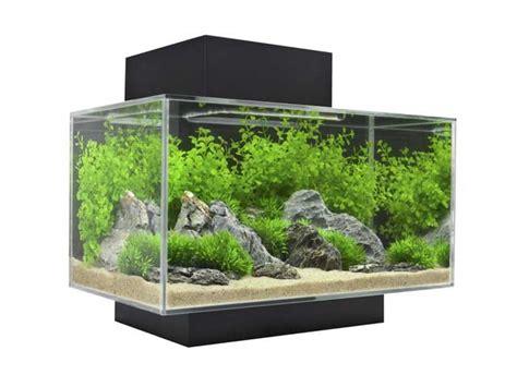 Akuarium Semut fluval edge i das beliebte nano aquarium set im test
