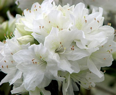 white flower images romantic flowers white flowers