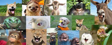 imagenes de animales felices animales felices