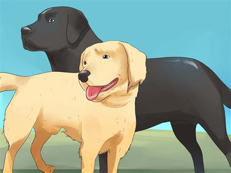 how to tell if your is in heat 3 ways to tell if your is in heat wikihow