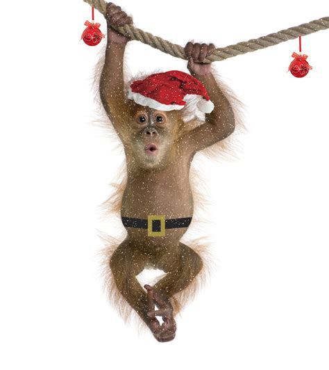 monkey santa is santa claus really the brand in the world