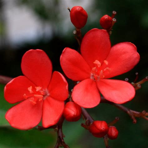 small flower plants small red flower by pascaleo on deviantart